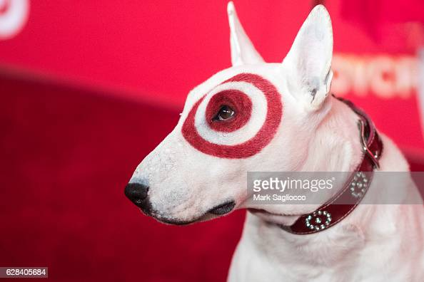 Spring studios stock photos and pictures getty images What kind of dog is the target mascot