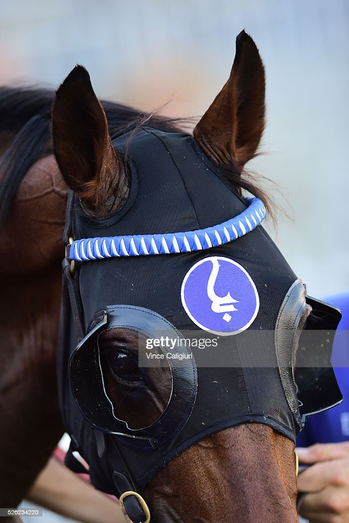 Tarquin after winning Race 2 during Melbourne Racing at Caulfield Racecourse on April 30, 2016 in Melbourne, Australia.