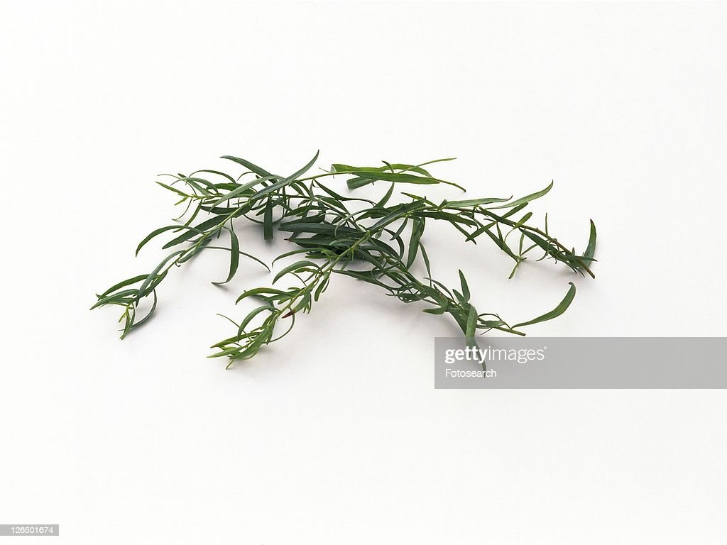 Tarragon leaves, high angle view
