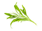 bunch of tarragon leaves isolated on white background