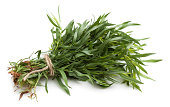 Bunch of fresh tarragon on white background