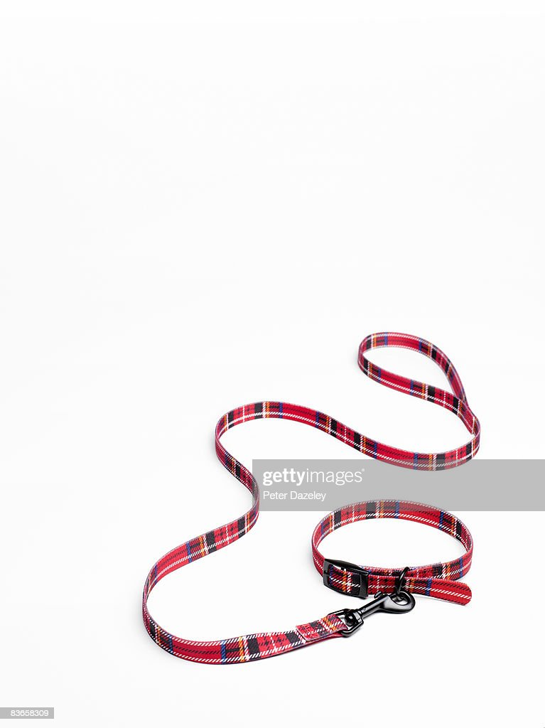 Tartan dog collar and lead : Stock Photo