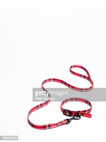 Tartan dog collar and lead : Foto de stock
