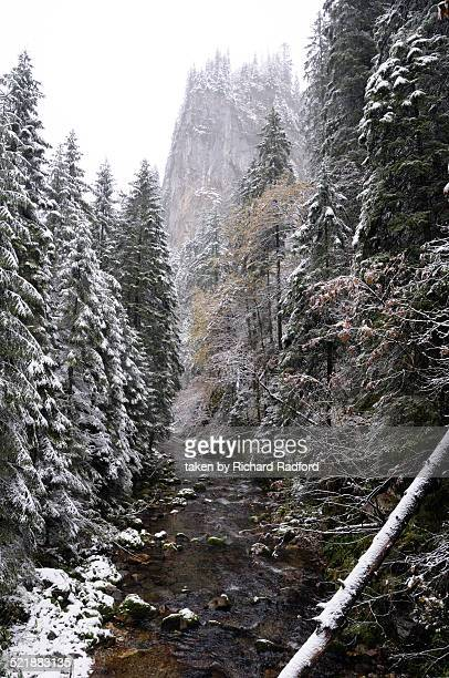 Tatra Mountain river valley with trees