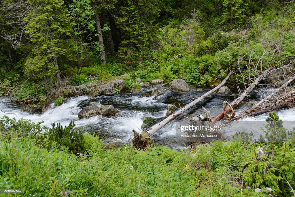 Tatra river : Stock Photo