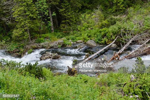 Tatra river : Foto de stock
