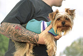 Tattooed Caucasian Man Holding A Happy Yorkshire Terrier