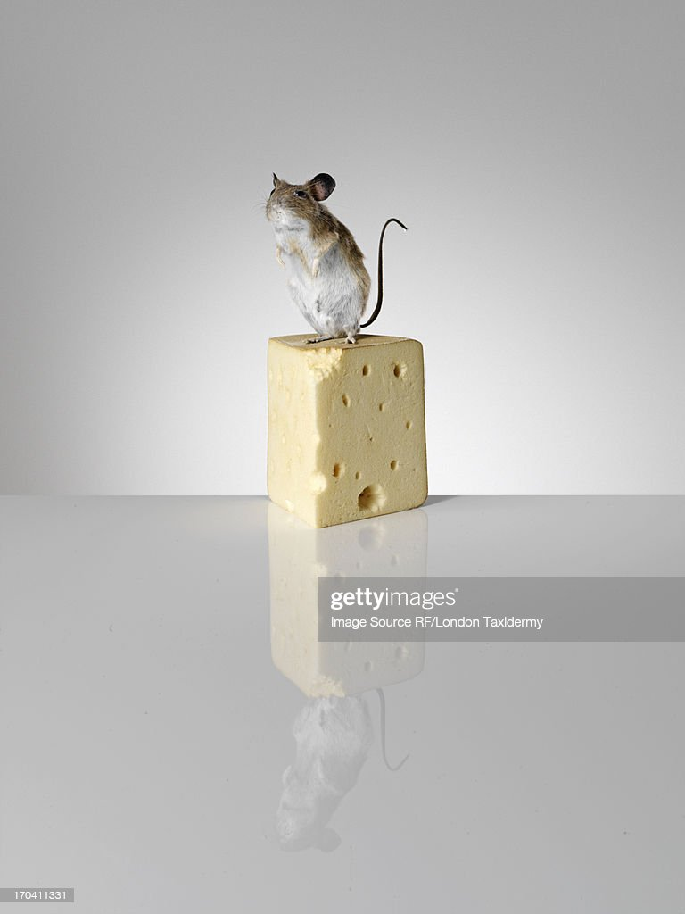 Taxidermied mouse on piece of cheese
