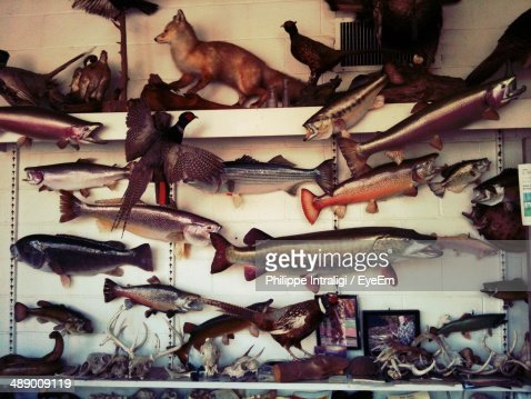 Taxidermy animals mounted on wall