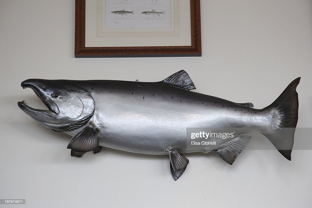 Taxidermy fish trophy