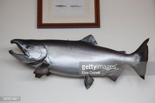 Taxidermy fish trophy