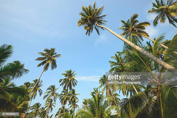 Tayrona national park palm trees