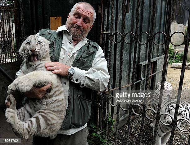 Tbilisi Zoo director Zurab Gurielidze holds a tenweekold white tiger cub while its mother Cameron looks from a cage in the zoo in Georgia's capital...