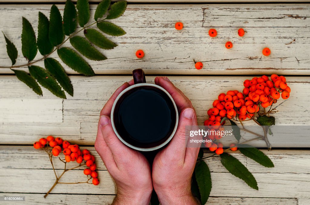 tea, cup, hands, rowan : Foto de stock