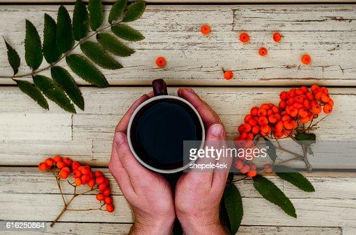 tea, cup, hands, rowan : Foto de stock