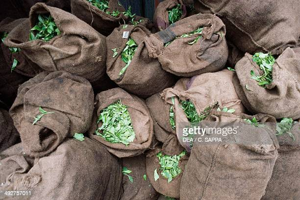 Tea in jute sacks Mauritius