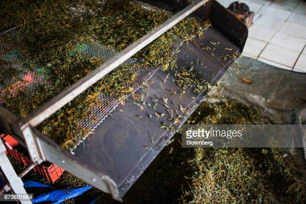 Tea leaves fall into a pile after being separated on a sifter machine at the factory of the Geragama Tea Estate operated by Pussellawa Plantations...