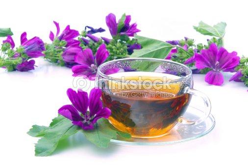 Tea malva with purple flowers on a white background stock photo tea malva with purple flowers on a white background stock photo mightylinksfo