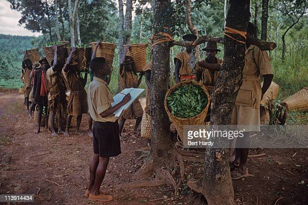 Tea pickers have their loads weighed and recorded on Edward Hulton's tea plantation in Nyasaland 1956 Original publication Picture Post 8541 Rhodesia...