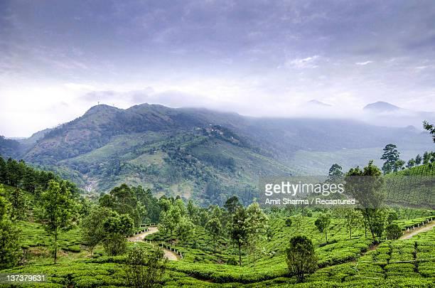Tea plantation and hills at Munnar