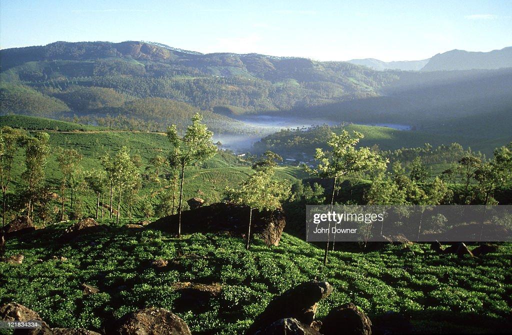Tea Plantations Western Ghats Kerala South India Stock Photo   Getty ...