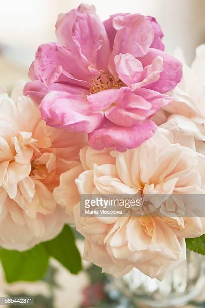 Tea rose mini flower bouquet