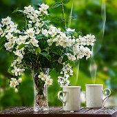 Cups of tea and a bouquet of jasmine