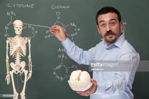 Teacher holding human brain model and pointing the skeleton