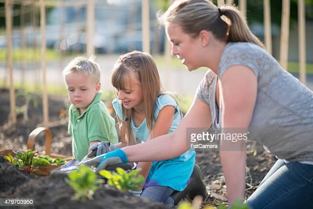 Ensinando crianças de Jardim