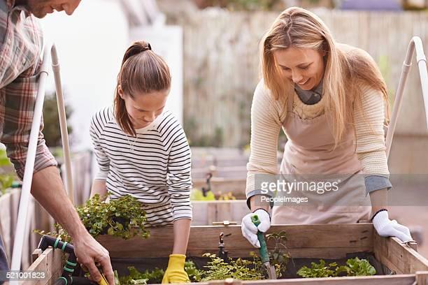 Unterricht green Wohnzimmer