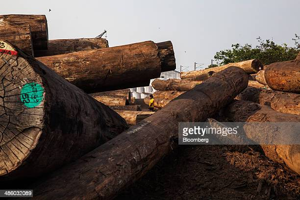 Teak timber logs from Myanmar sit on the dockside at the Kolkata Dock System part of the Kolkata Port Trust in Kolkata West Bengal India on Wednesday...