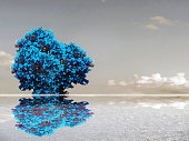 teal color flower reflection sky cloud and water surface of lake