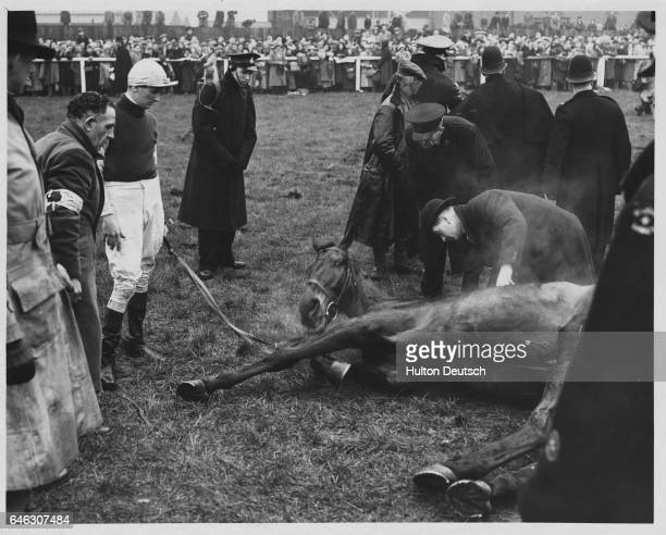 Teal Wins Double Start Grand National At Aintree today in heavy rain and after a false start Mr H Lane's Teal won the Grand National at 1007 2nd was...