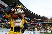 wellington new zealand team mascot captain