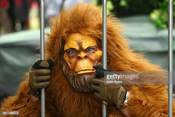 A team member in a monkey suit poses during the 2015 Red Bull Billy Cart Race at Centennial Park on November 15 2015 in Sydney Australia The annual...