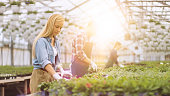 Team of Happy Gardeners Busily Working, Arranging, Sorting Colorful Flowers, Vegetation and Plants in a Sunny Industrial Greenhouse.