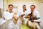 Team of smiling veterinarian with animals at success pet ambulance