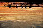 Team work of young men in a row boat silhouetted at sunset