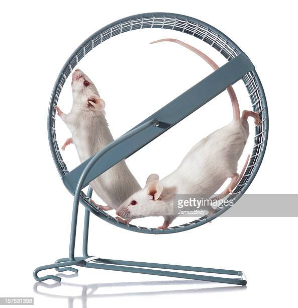 Teamwork; Two White Mice Team Exercising in Running Wheel