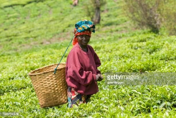 Teapicker in Rwanda carrying a basket on her back in a field