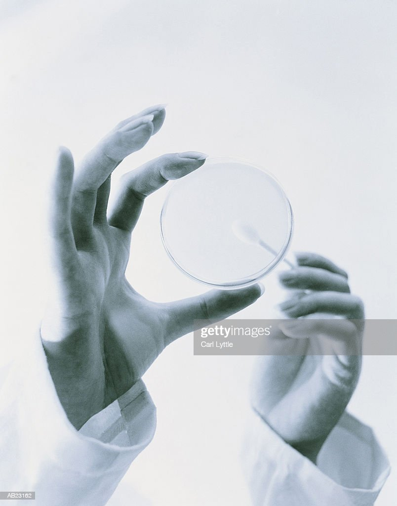 Technician holding petri dish and swab, close-up, low angle (B&W) : Stock Photo