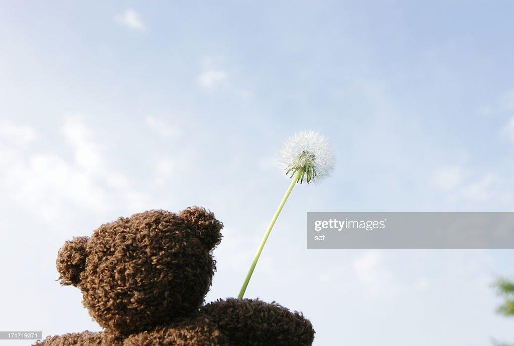 Teddy bear holding Dandelion seed head,rear view : Stock Photo