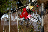 A teddy bear is seen attached to the fence near the spot where Walter Scott was killed on April 4th by a North Charleston police officer on April 10...