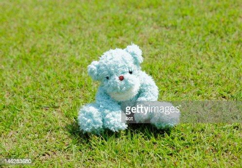 Teddy bear sitting on lawn : Stock Photo
