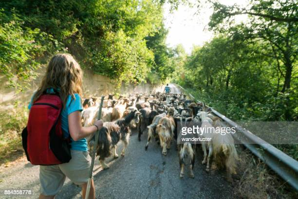 Teen girl follows goats on transumanza