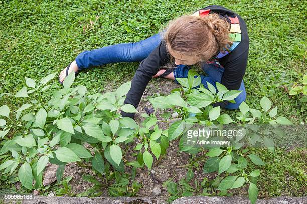 Teen girl sits outside tending a small patch of green jalapeño peppers in backyard of house in urban neighborhood