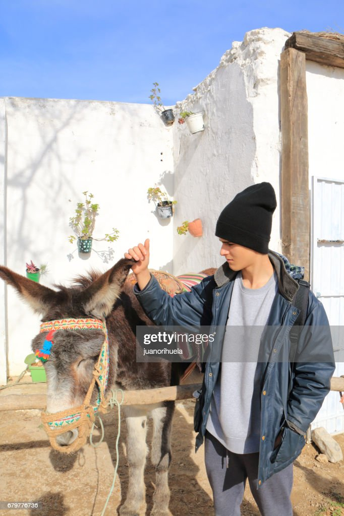 donkey teen