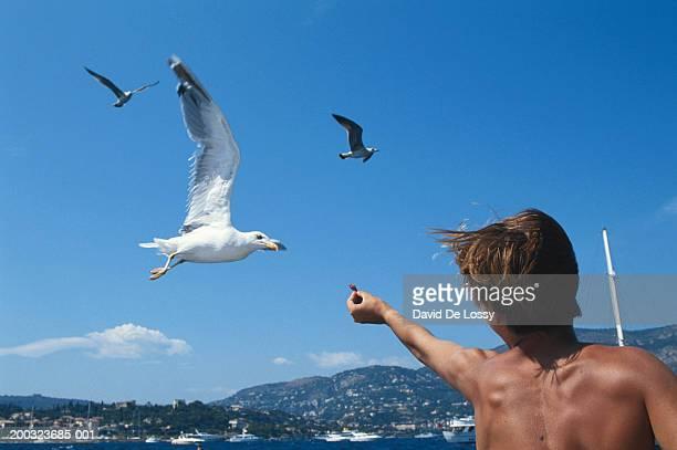 Teenage boy (13-15) feeding seagulls, low angle view