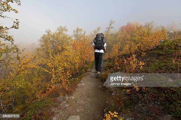 Teenage boy hiking, rear view