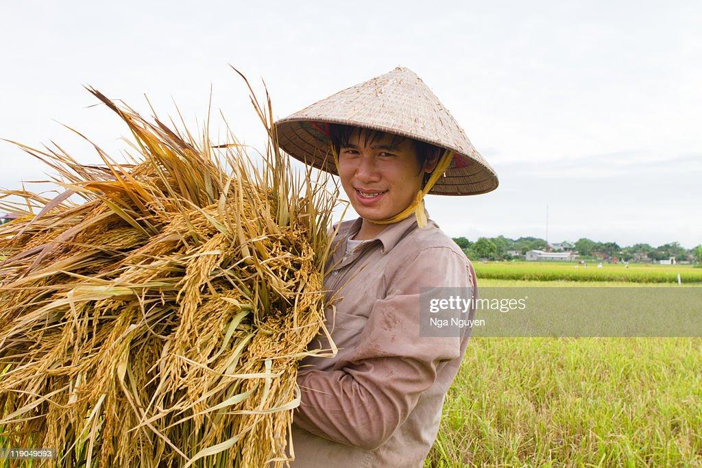 Teenage boy holding rice stalks